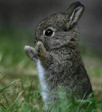 Il coniglietto con berretto e bandoliera